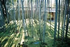 竹提の明り