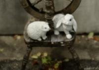 SONY DSLR-A900で撮影した(戯れ)の写真(画像)