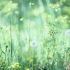 草叢で目覚める