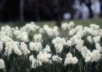 OLYMPUS E-M5で撮影した(合唱)の写真(画像)