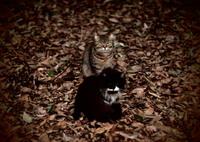 OLYMPUS E-M5で撮影した(新生活)の写真(画像)