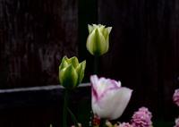 OLYMPUS E-M5で撮影した(spring green)の写真(画像)