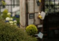 SONY DSLR-A900で撮影した(sweet memory)の写真(画像)