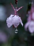 雨の合間に その1