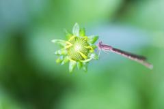 小さな花に