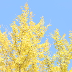CANON Canon EOS 5D Mark IVで撮影した(秋の輝き)の写真(画像)