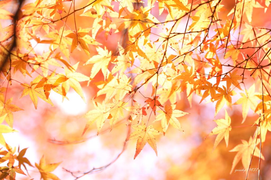 秋、かく輝けり