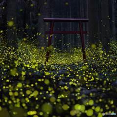 森の光景 13