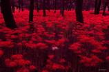 早朝の赤絨毯