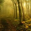 不思議な森の入口