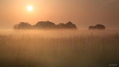 渡良瀬朝靄の中で