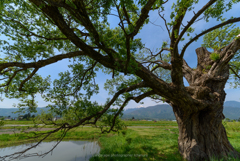 古木の息吹
