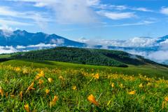ニッコウキスゲの咲く高原