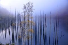 ガスに覆われた自然湖の朝