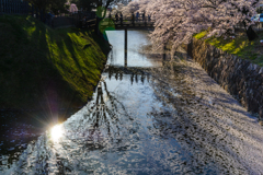 桜舞うVOL1