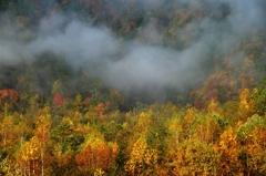 朝霧に映え#2