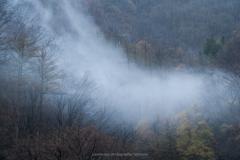 朝霧に煙る(白馬村)