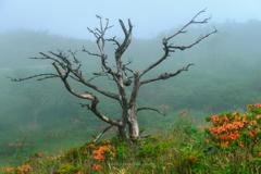 朽木の造形