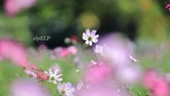 『 夢の季節 』