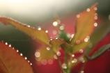 Art of morning dew Pt23