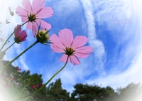 CANON Canon EOS 5D Mark IIIで撮影した(『空』)の写真(画像)