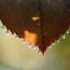 Art of morning dew Pt16