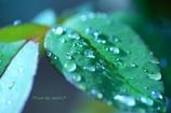 Art of rain Pt23