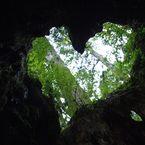 Yakushima Wilson Stump