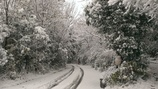 爆弾低気圧で杜もすっかり雪景色1(^O^)