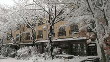 爆弾低気圧で杜もすっかり雪景色2(^O^)
