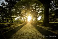 舞鶴公園の日出