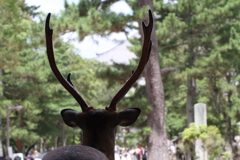 神々しい春日大社の鹿