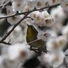 春の香りを楽しむ