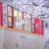 ~やわらかな桜風~