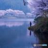桜咲くダム湖に釣り人あり