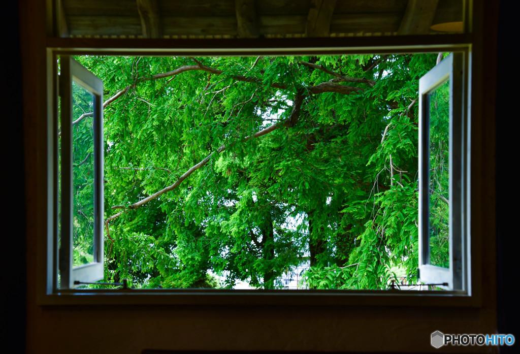 新緑の窓から