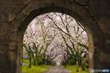 円応寺 参道の桜並木