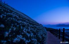 水仙公園の夜明け