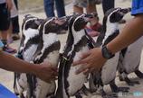 ペンギン見守られて