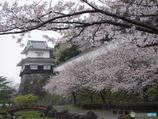 桜満開の大村公園