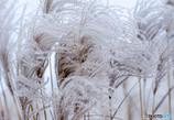 薄野冬景色