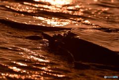 日の出と満潮