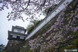大村公園-白壁に咲く