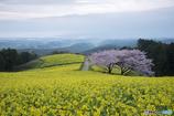 白木峰の春