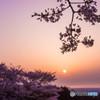 日の出と桜シルエット