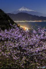 古道に咲く春