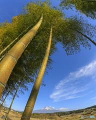 竹撮り物語