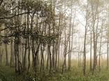 霧霧舞 (きりきりまい)
