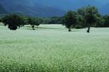 緑のダウンヒル