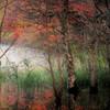 ぬた場の秋